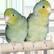 Попугаи и другие птицы